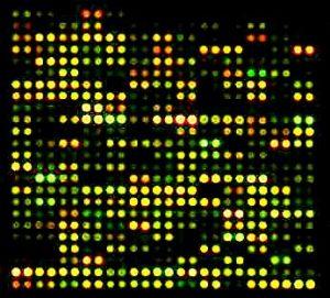 mRNA expression; one of 48 subarrays of the stickleback 15K cDNA array