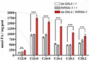 GC/MS analysis of fatty acids from Drosophila L3 larvae (Myristic acid (C14:0), palmitic acid (C16:0), palmitoleic acid (C16:1), oleic acid (C18:1) and linoleic acid (C18:2)).