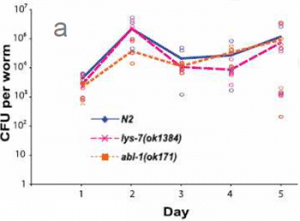 Figure 1: (a) S.Typhimurium load per nematode and (b) nematode survival curve.