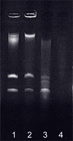 1. E.coli (Precellys) 2. E.coli (standard) 3. B.globigii spores (Precellys) 4. B.globigii spores (Standard) LGN Paris, April 2004 RNA extraction after lysis