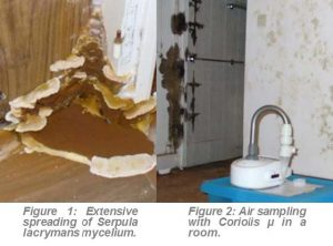 04131-203-SL027_Fungi_PCR_IndoorHouses