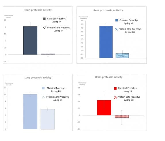 Impact of the Protein Safe Lysing kit on protease activity during animal tissues homogenization with Precellys